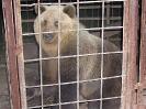 Встретили уральского медведя