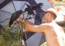 Вороны под зонтиком